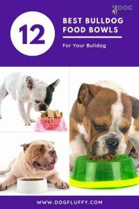 12 Best Bulldog Food Bowls
