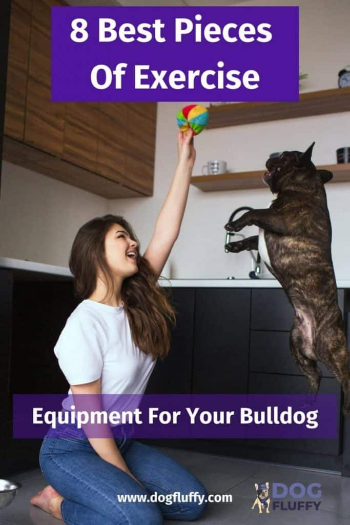 Exercise Equipment For Your Bulldog Pinterest Image