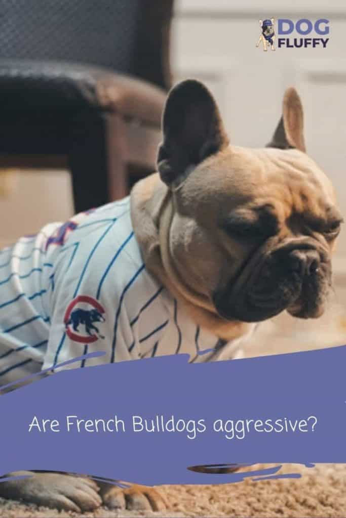 Are French Bulldogs Aggressive 6