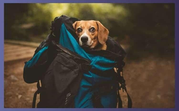 Backpacks for Dogs