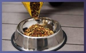 Best Dry Food For Dogs 1