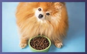 Best Dry Food For Dogs