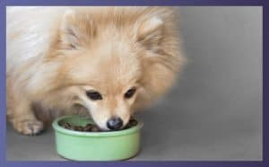 Best Dry Food For Dogs 4