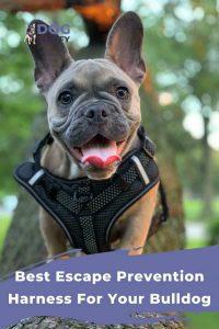 Best Escape Prevention Harness For Your Bulldog 1