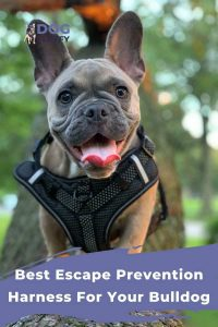 Best Escape Prevention Harness For Your Bulldog