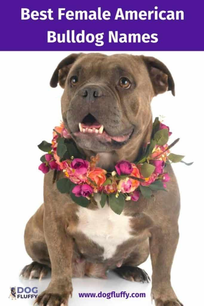 Best Female American Bulldog Names