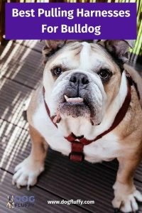 Best Pulling Harnesses For American Bulldogs 6