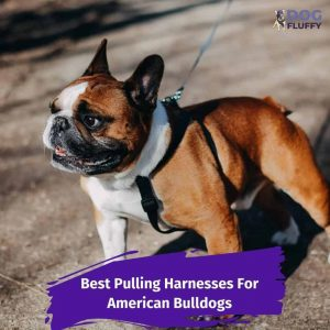 Best Pulling Harnesses For American Bulldogs 7