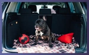 Car Seats for French Bulldog