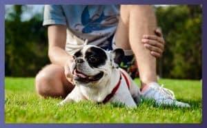 Do Bulldogs Make Good Pets 2