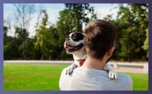 Do Bulldogs Make Good Pets 3