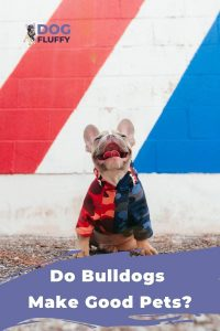 Do Bulldogs Make Good Pets Article