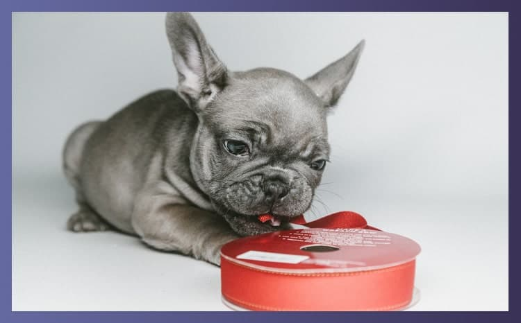 Do Bulldogs Make Good Pets