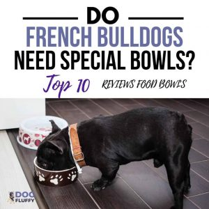 Do French Bulldogs Need Special Bowls 10 Reviews Of The Top Food Bowls IG Site