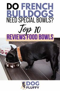 Do French Bulldogs Need Special Bowls - Pin #2