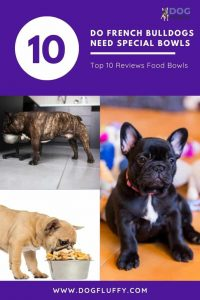 Do French Bulldogs Need Special Bowls Best 10 - Pinterest Website