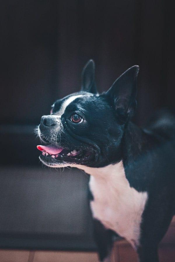 Dog Fluffy Blog