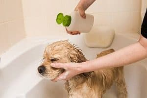 Dog Shampoo For Sensitive Skin