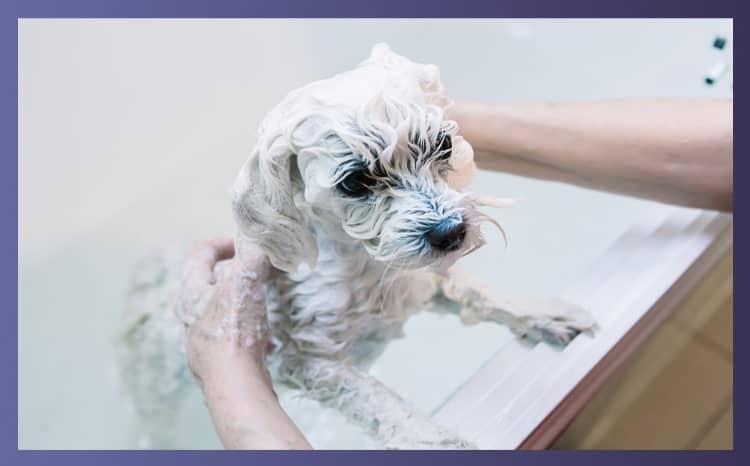Final Thoughts For Dog Shampoo For Sensitive Skin