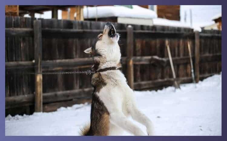 How Do I Get My Bulldog to Stop Barking
