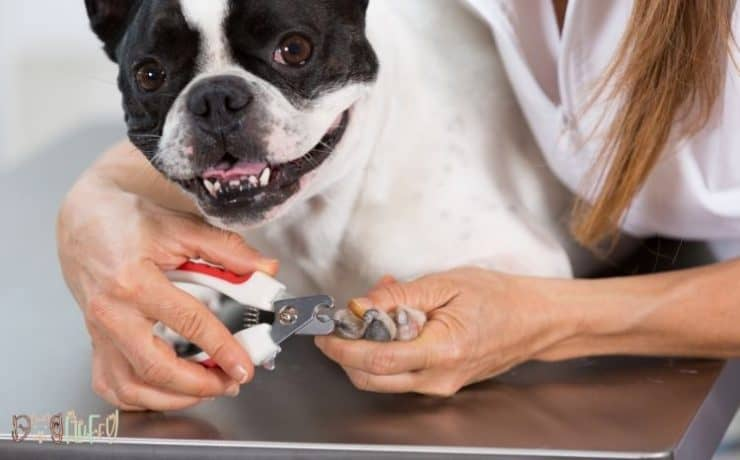 Should French bulldogs have their dew claws removed