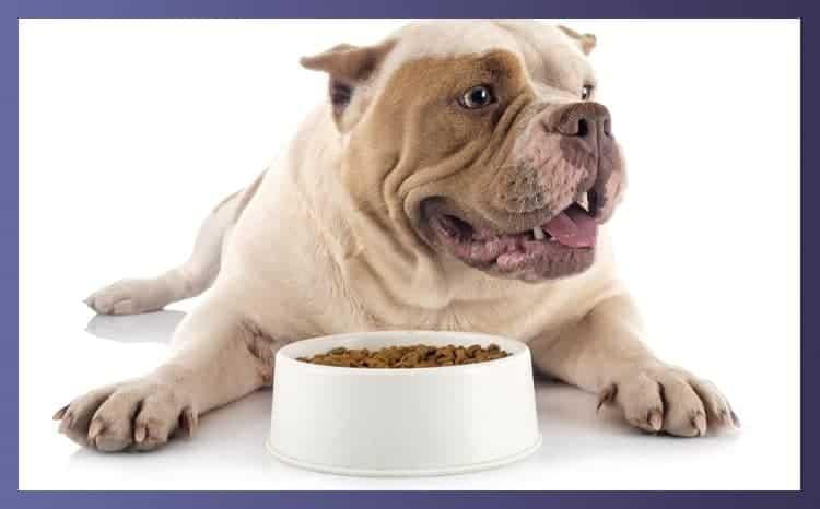Top 12 Bulldog Food Bowls