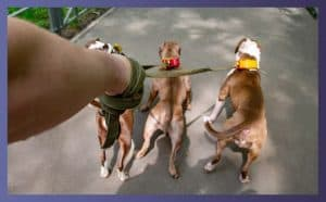 Types of Training Leashes for Bulldogs