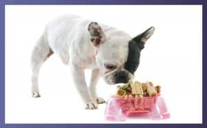 What Size Bowl Should I Get For My French Bulldog