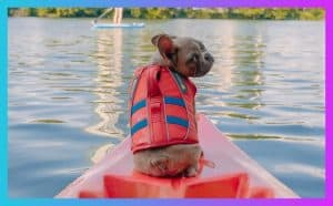 What Size Life Jacket For My Dog 2
