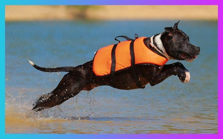 what size life jacket for my dog