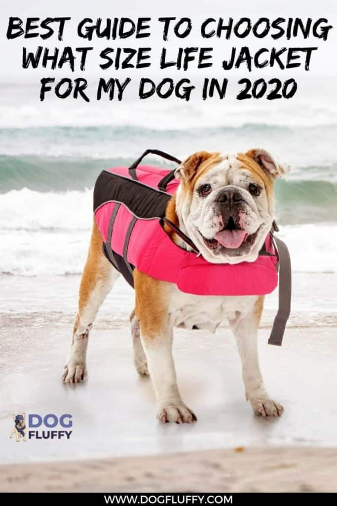What Size Life Jacket for My Dog in 2020