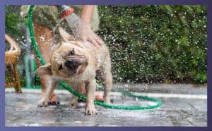 What to Consider When Buying Dog Shampoo for Sensitive Skin For Your Bulldog