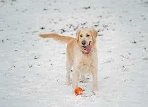 Why Is My Dog Drooling After Eating Snow Featured Image