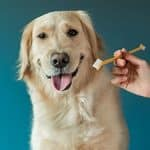 The 5 Best Dog Toothpaste