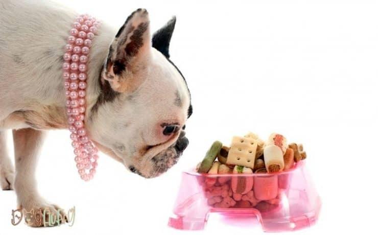 bulldog food bowl