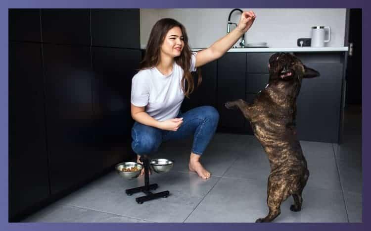 femal giving treat to bulldog