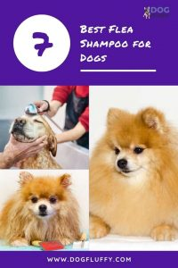 flea shampoo for dogs - Pinterest Website