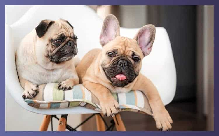 Highchairs For Dogs