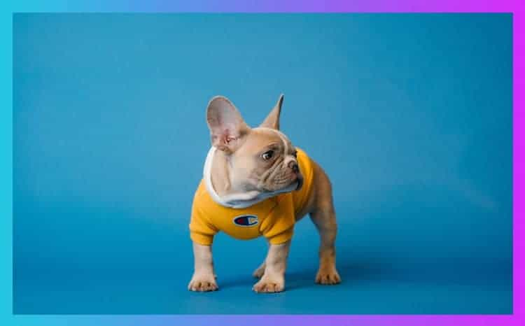 raincoats for french bulldogs