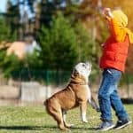 Best Guide of Training English Bulldogs in 2020