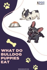 what do bulldog puppies eat 5