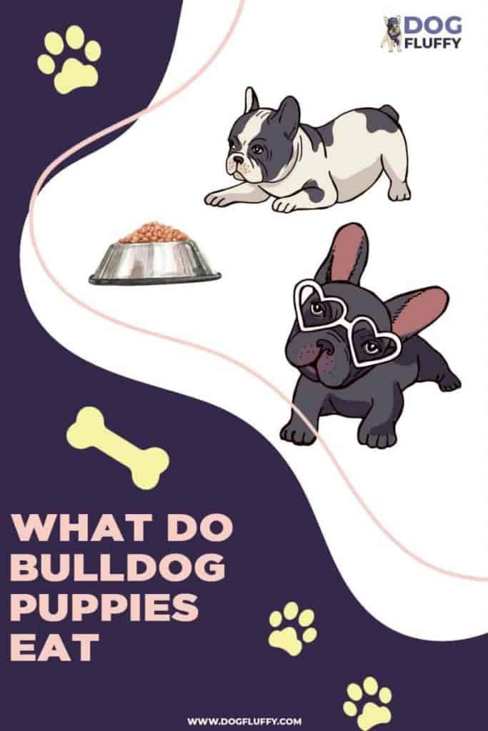 what do bulldog puppies eat