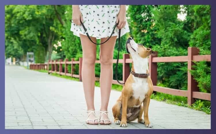 what is the best leash for training a dog