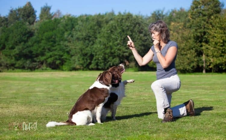 whistle fitbit for dogs