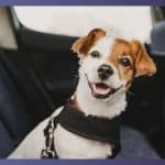 8 Best Car Zipline Harness For Dogs
