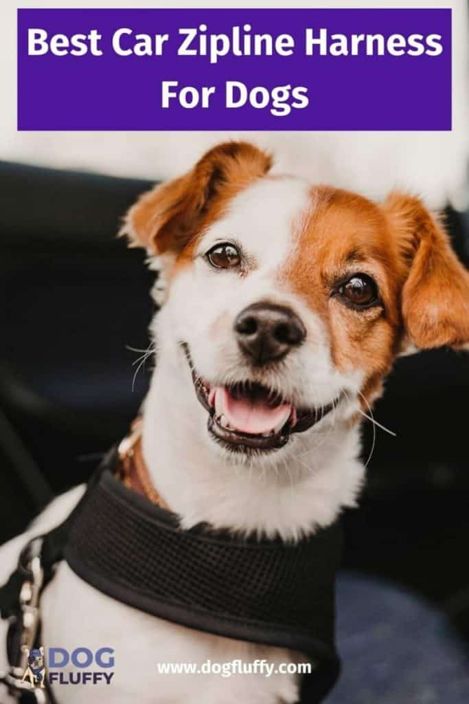 zipline harness for dogs pinterest image