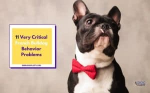 Critical French Bulldog Behavior Problems Featured Image