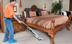 6 Best Carpet Cleaners for Dogs