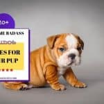 20+ Awesome Badass Bulldog Names For Your Pup