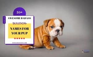 Badass bulldog names - featured image